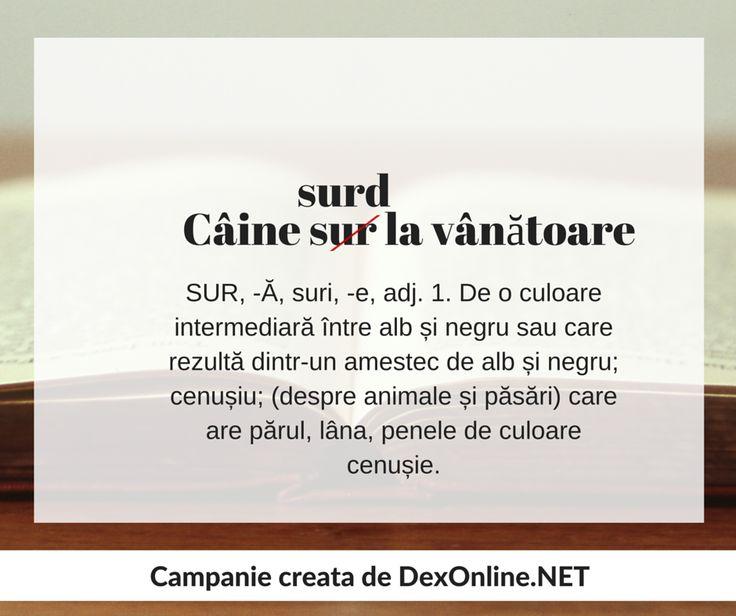 Dexonline promoveaza limba romana vorbita corect http://dexonline.net/definitie-sur     #salveazalimbaromana #gramatica