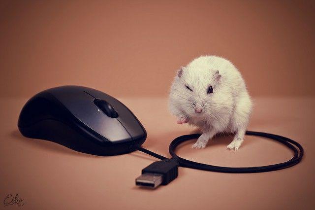 Funny Animals by Eibo