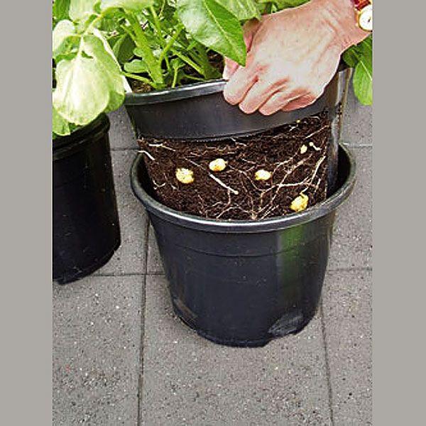 PotatoPot - Potatishink, potatishink - odla potatis i hink