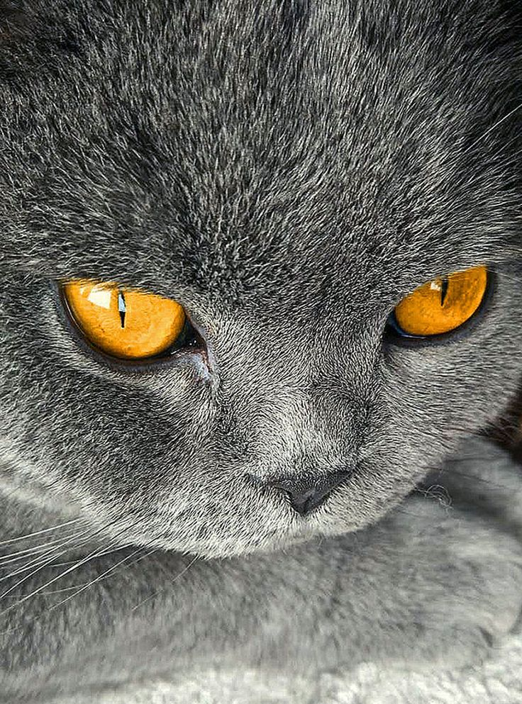 my cat by yunping ren on 500px