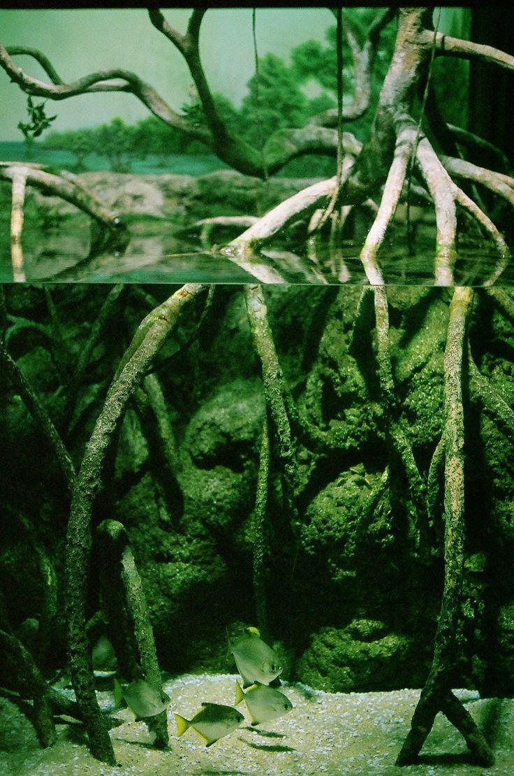 best paludarium images on pinterest plants aquariums and
