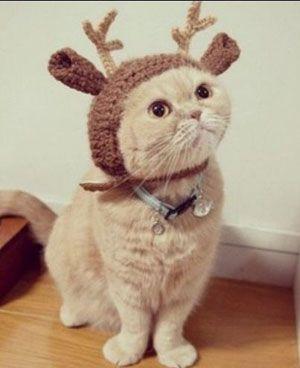 Смешные фотографии кошек