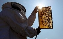 Why are bees dying? Is Bayer (maker of pesticide) responsible? #examinercom