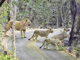 The proposed freight corridor through the Sanjay Gandhi National Park in Mumbai poses a threat to wildlife.