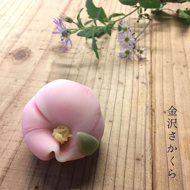 山茶花-さざんか- 煉切製・こしあん。 毎年この山茶花を始める頃、 童謡の「たき火」を口ずさむのですが 北風ぴいぷう の部分の歌詞が好きです☆ たき火・山茶花・ぴいぷう がキーワードだと思って口ずさんでいますが 昭和の景色だけでなく、今もなお見かける景色にワクワク楽しくなります☺︎ #和菓子#和菓子屋#wagashi#上生菓子#主菓子#茶道#茶席#茶の湯#japanesesweets#japaneseconfectionary#chadou#greentea#plantbased#vegan#金沢さかくら#さかくら#横浜#金沢区#金沢文庫#山茶花 #sazanka #たき火