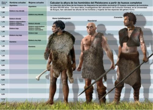 The reconstruction of 27 complete human limb bones found in Atapuerca (Burgos, Spain) has helped to determine the height of various species of the Pleistocene era. Homo heilderbergensis, like Neanderthals, were similar in height to the current population of the Mediterranean.