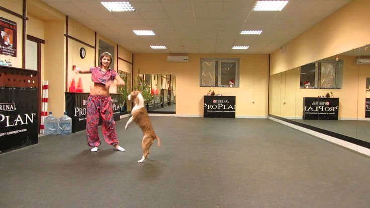 OMG I Think This Dog Is The Best Dancer I've Ever