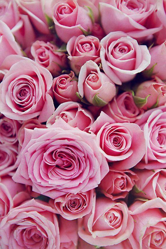 Untitled // Flowers