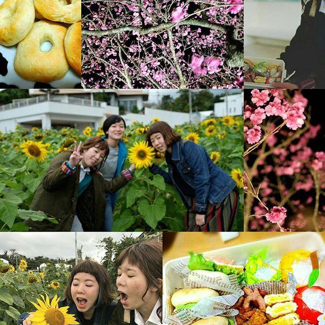 【chihiroasato】さんのInstagramをピンしています。 《楽しかったな〜(๑´•.̫ • `๑)♡ #冬のひまわり #沖縄 #okinawa #桜 #夜桜 #今帰仁城跡 #てごねパン #お弁当 #ピクニック #ピクニック弁当 #ベーグル #手作りベーグルサンド》