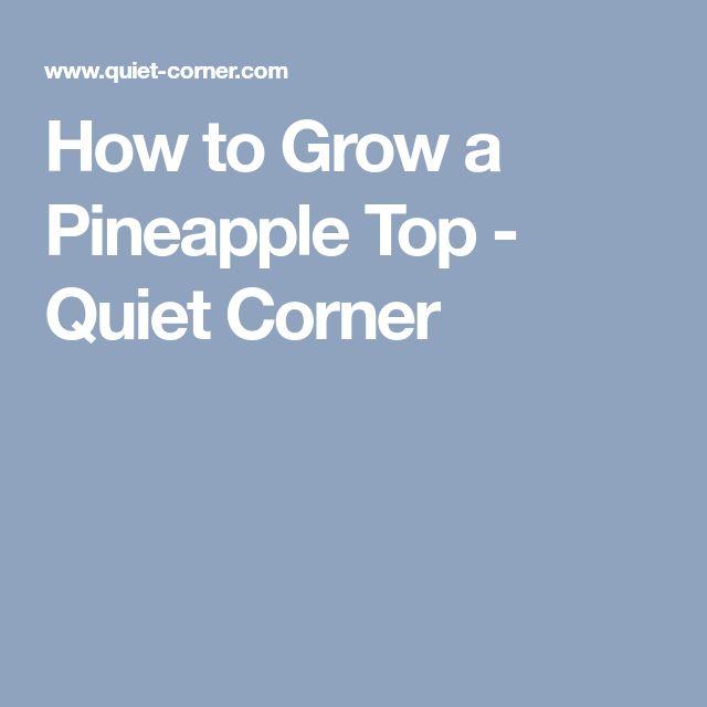 How to Grow a Pineapple Top - Quiet Corner