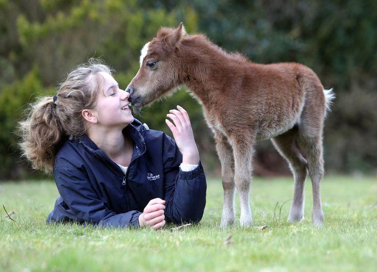 Sorrel, un mânz în vârstă de 4 zile şi înalt de 50 cm, născut în cadrul Centrului pentru Cai în Miniatură din Dartmoor, Devon, Marea Britanie, stă alături de Victoria Ginsberg, o fetiţă de 13 ani, sâmbătă, 6 aprilie 2013. (  Richard Austin / Rex Features / Guliver  ) - See more at: http://zoom.mediafax.ro/nature/animale-in-jurul-lumii-aprilie-2013-10795986#sthash.CI4TnofL.dpuf