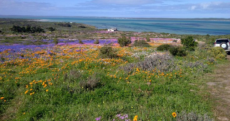 LANGEBAAN SANDS IS A NEW LUXURY TOWNHOUSE DEVELOPMENT IN THE SANDBAAI AREA CLOSE TO THE BEACH AND LANGEBAAN YACHT CLUB AS WELL AS PART OF MYBURG PARK.