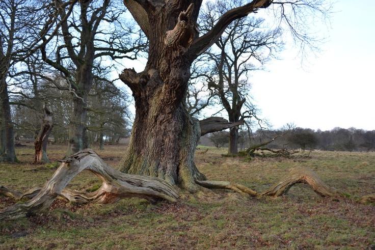 Deer Park Lyngby