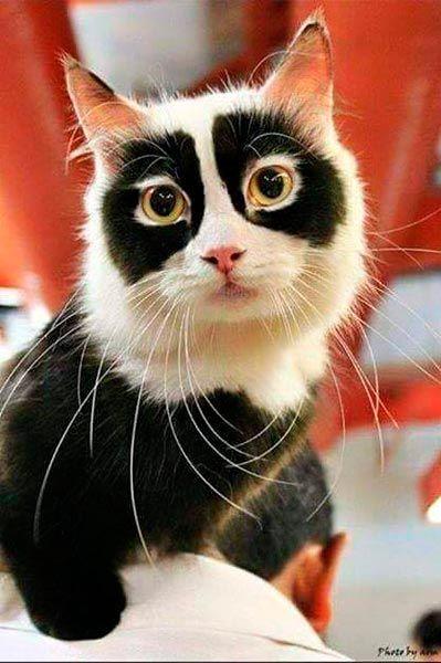 Incredibile come la natura si diverta a giocare con macchie e colori sul muso dei gatti. E altrettanto incredibile come i padroni dei felini passino il tempo a
