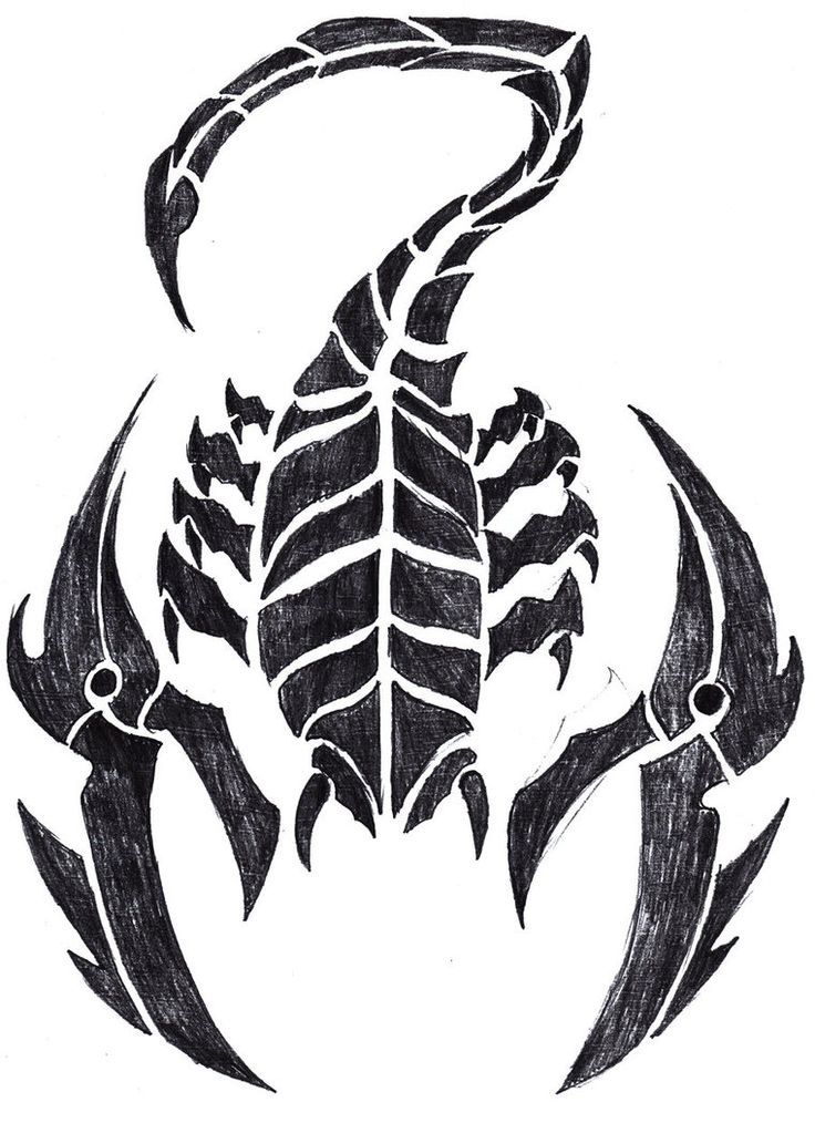 Tribal Scorpion Tattoo Drawing