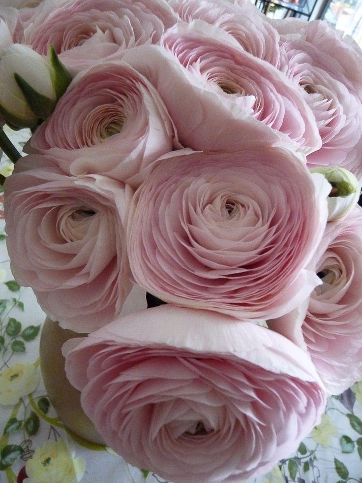 Bouquet de #renoncules à fleurs doubles, Paris 14e (75)
