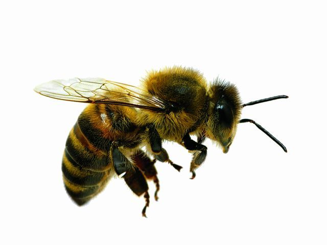 Bill advances to exempt bees from sales tax