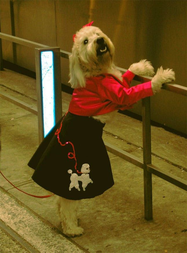 62 Of The Best Halloween Dog Costumes Pet Halloween Costumes