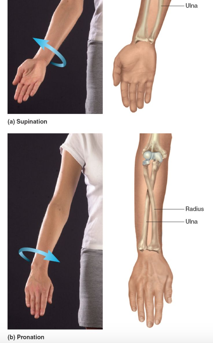 What Is Radial Balance In Art: Best 25+ Radius And Ulna Ideas On Pinterest