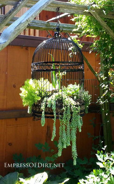 "Bird Cage With Succulents (""Sedum morganianum"" or ""Donkey Tail"")"