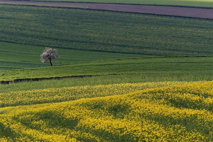 Okolice Trzeszczan, Lubelszczyzna, pola... . Fot. Marek Ryś