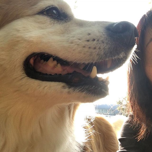 🐕💫 🤷🏻♀️早朝☀️から失敗自撮り😝💦 . . . #元保護犬 #保護犬 #雑種犬 #譲渡犬 #ライフボート #きなこ #ミックス犬 #里親 #動物愛護 #犬 #愛犬 #dog #mixdog #rescueddog #follow #子犬 #愛情 #保護活動 #殺処分 #わんこ #LINEスタンプクリエイターズ #ふわもこ部  #保護犬のきなこ  #保護犬スタンプ #失敗 #自撮り