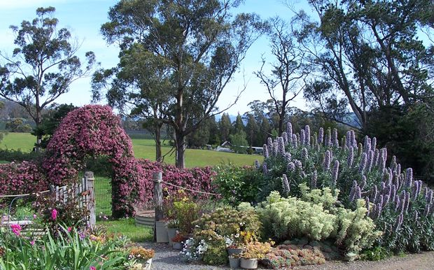Open Gardens Australia - Woodstock garden in Tasmania featuring roses,perennials succulents native species and grasses.
