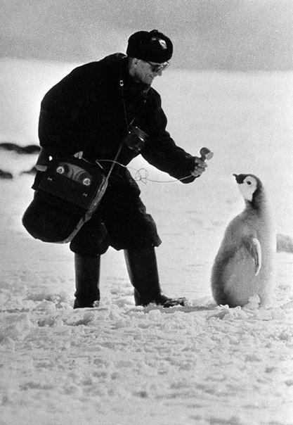 Московский корреспондент берет интервью у пингвина в Антарктиде. 1966 год.