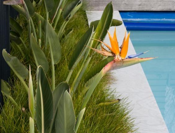 114 best New Zealand Designed Gardens images on Pinterest Karen
