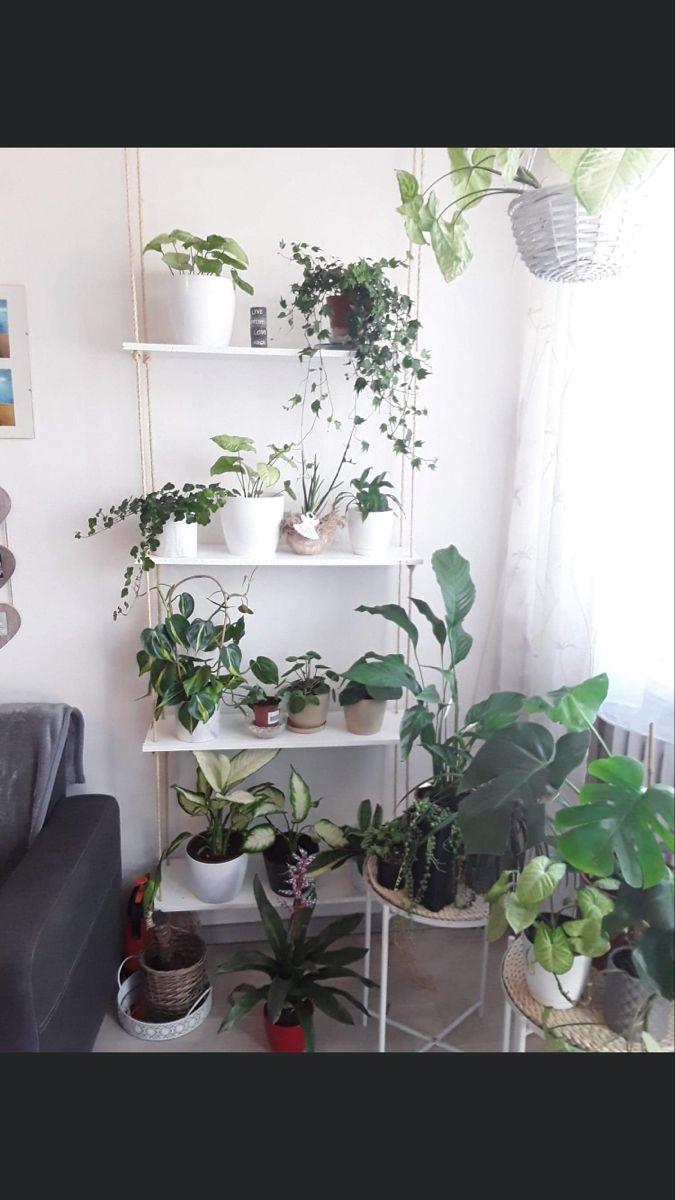 Kwiaty W Domu Plant Decor Plants Decor