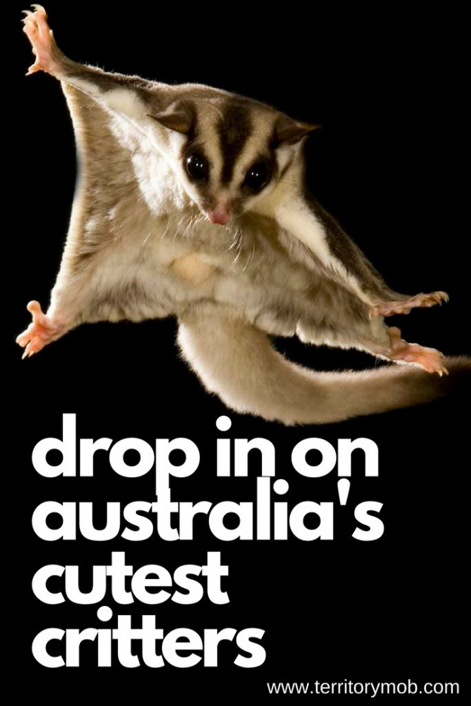 Drop in on Australia's Cutest Critters — Territory Mob