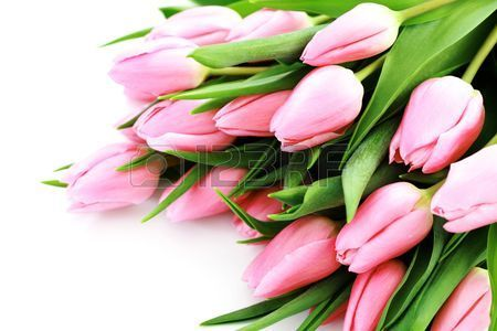 bouquet of lovely pink tulips on white background - flowers