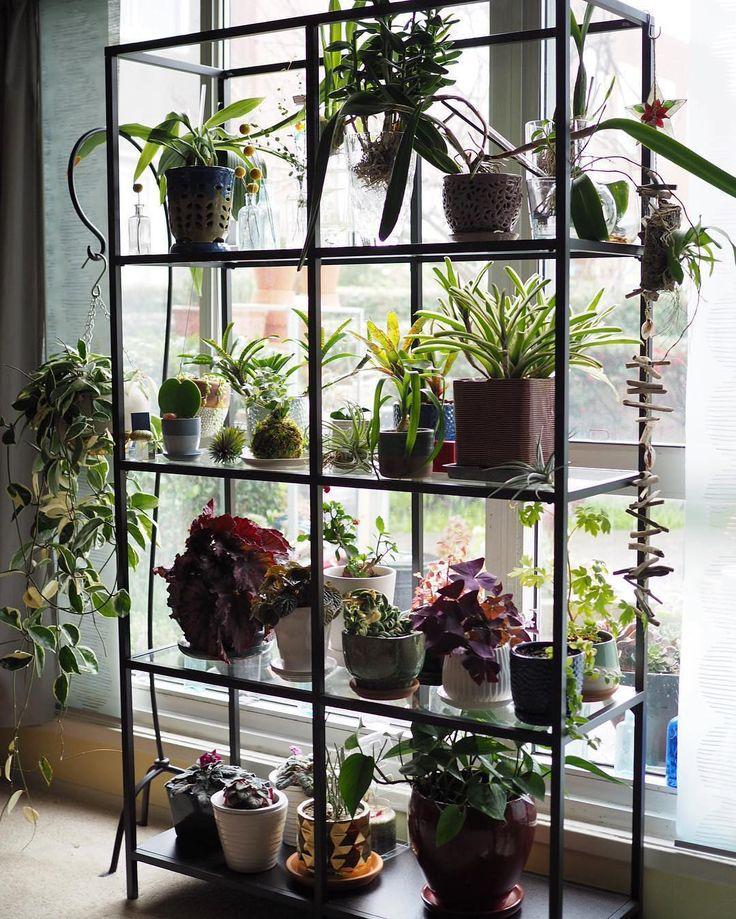Kitchen Plant Shelf Decorating Ideas: Best 25+ Plant Shelves Ideas On Pinterest