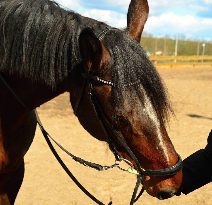 """""""#hors #horses"""" from hc.hobby.photo on instagram"""
