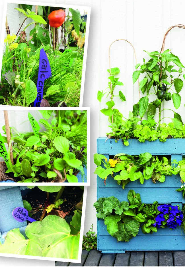 One-hour-fix: Garden tags | Good Magazine Make your own colourful garden plant labels by upcycling your eco picnicware. Click the link below for a step-by-step guide. #reclaimthat #Sarah_Heeringa    www.good.net.nz/article/2015/12/how-build-living-wall-step-step