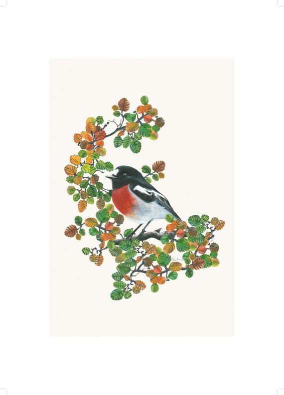 The Little Wren Scarlet Robin in Fagus Art by TheLittleWrenArt