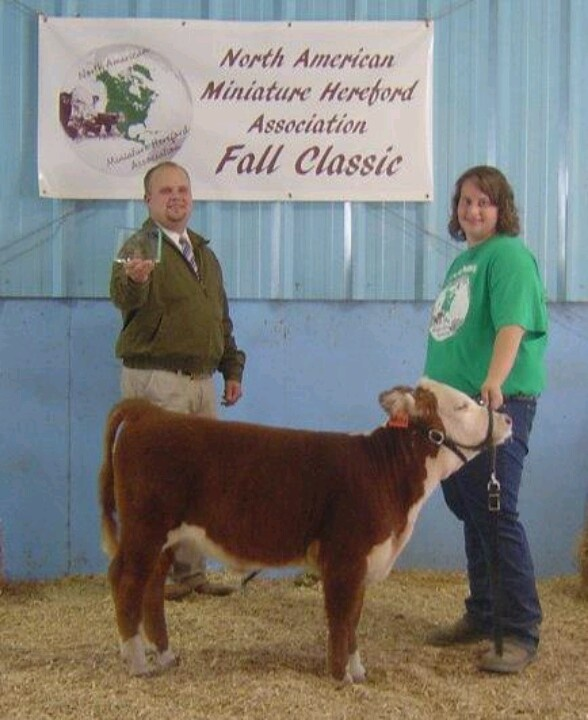 Ulrich's Miniature Herefords