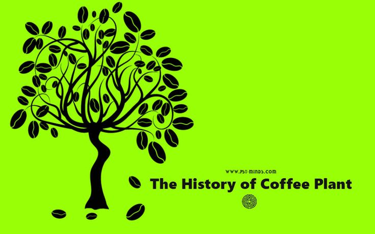 The History of Coffee Plant - @psyminds17