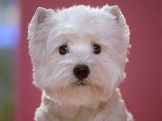 Caesars Dog Food Commercial