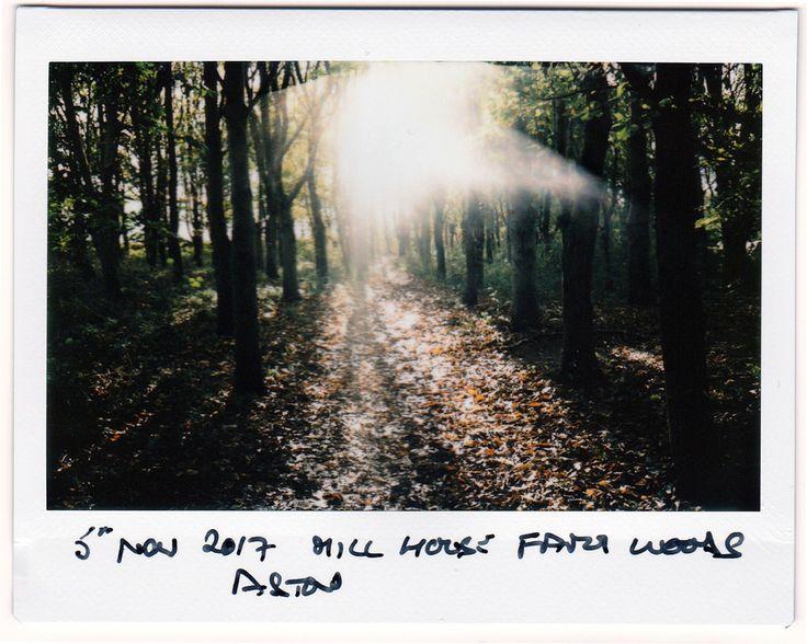 https://flic.kr/p/216xAqU | Mill House Farm Woods