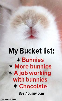 And don't forget, more bunnies. A Bunny lovers Bucket list! www.best4bunny.com