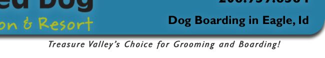 Dog Grooming includes: Massage and Bath, Blow Dry, Ear Cleaning, Nail Trimming, Hair Trimming and Finishing.