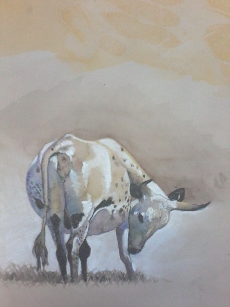 Water colour Cow painting. art by Tess Reid's Fine Art