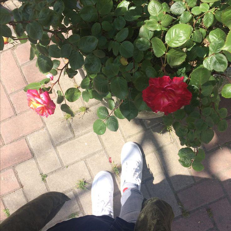 Sana geldiğimde gönlümde güller açtırmalısın