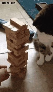 Omg how did that not fall! This cat is incredible!