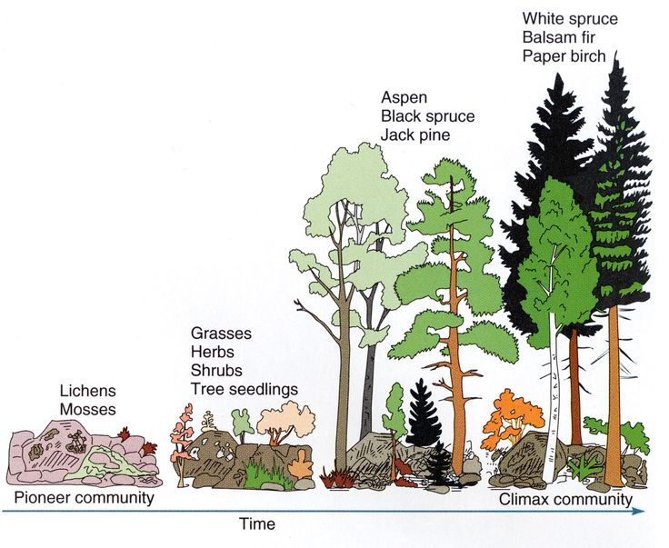 25+ best ideas about Ecological succession on Pinterest | Biology ...