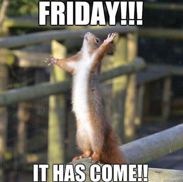 176a636a07f51be89c0ca82756a1f38c squirrel memes red squirrel 40 best squirrel memes images on pinterest squirrel memes,Funny Squirrel Memes