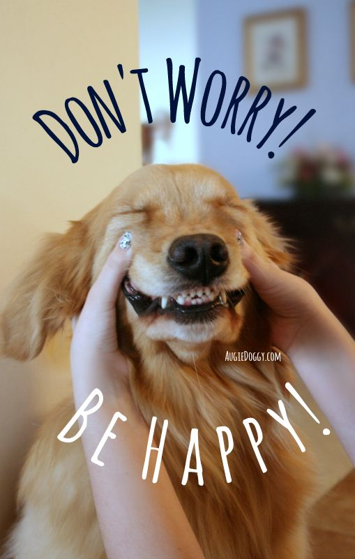 "Golden retriever Ti says, ""Don't worry! Be happy!"""