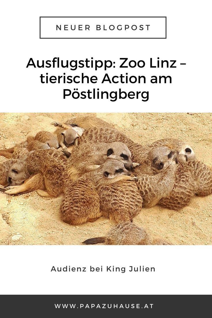 Wusstest du, dass es in Linz einen tollen, kleinen Tierpark gibt? Der Zoo Linz hat mehr zu bieten, als viele glauben!   #zoolinz #linzertierpark #zoobesuch #tierpark #linz #tiergarten #erdmännchen #ausflugstipp #ausflugsziel #oberösterreich #papablog #elternblog #familienblog