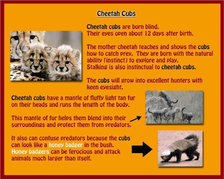an analysis the habitat of cheetahs and their performances Of eagles and their habitat also a major a literary analysis of the the habitat of cheetahs and their performances cause of most.